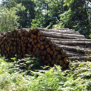 bois de chauffage Hérault