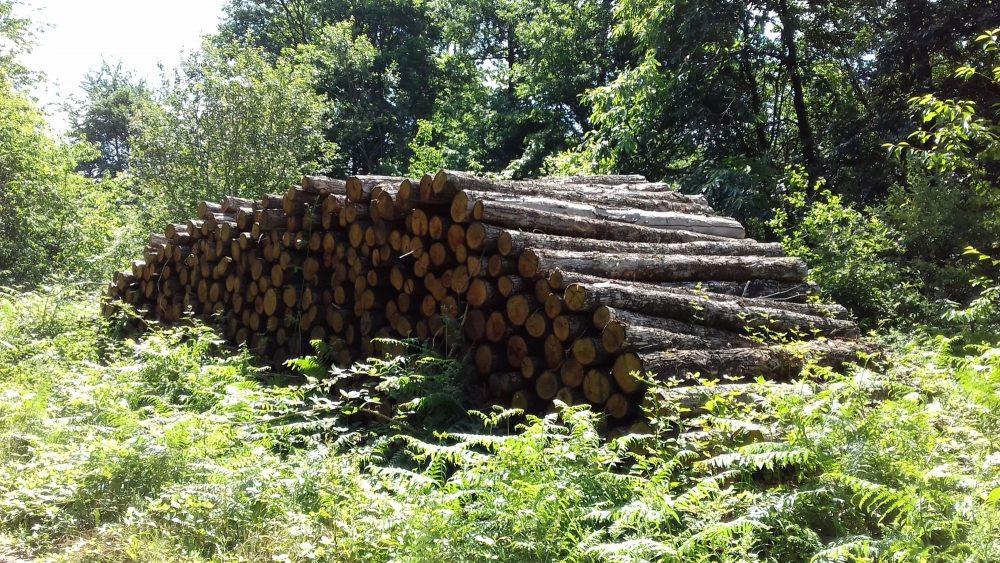bois de chauffage Nord