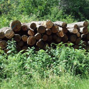 bois de chauffage Indre