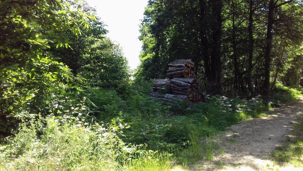 bois de chauffage Indre-et-Loire