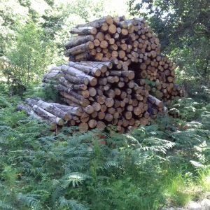 bois de chauffage Pas-de-Calais