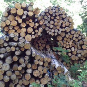 bois de chauffage Jura