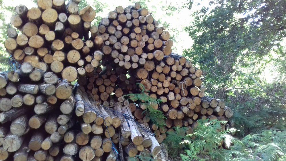 bois de chauffage Loir-et-Cher