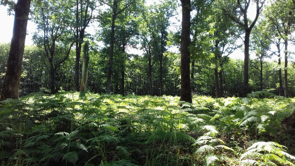 bois de chauffage Haut-Rhin