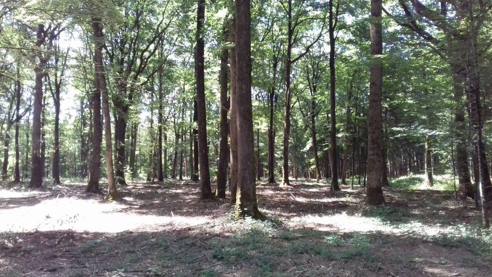 bois de chauffage Aisne