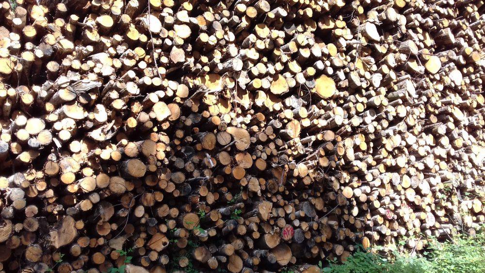 bois de chauffage Alpes-de-Haute-Provence