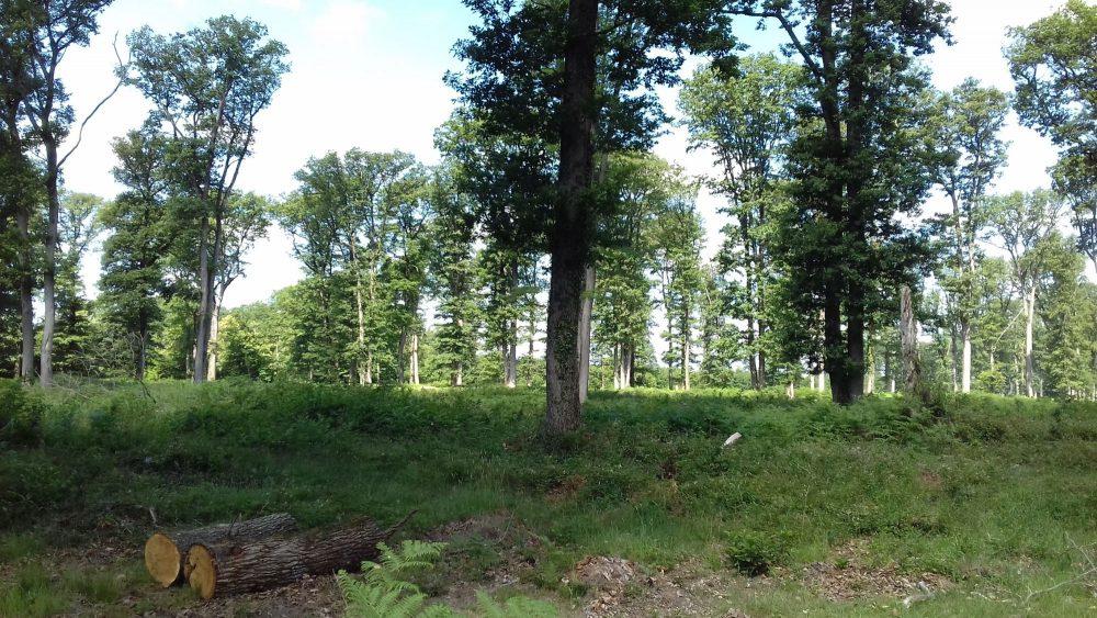 bois de chauffage Ardennes