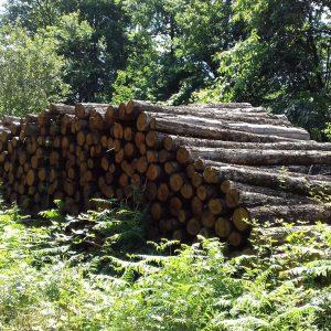 bois de chauffage Charente