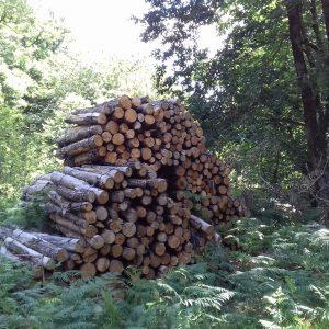 bois de chauffage Charente-Maritime