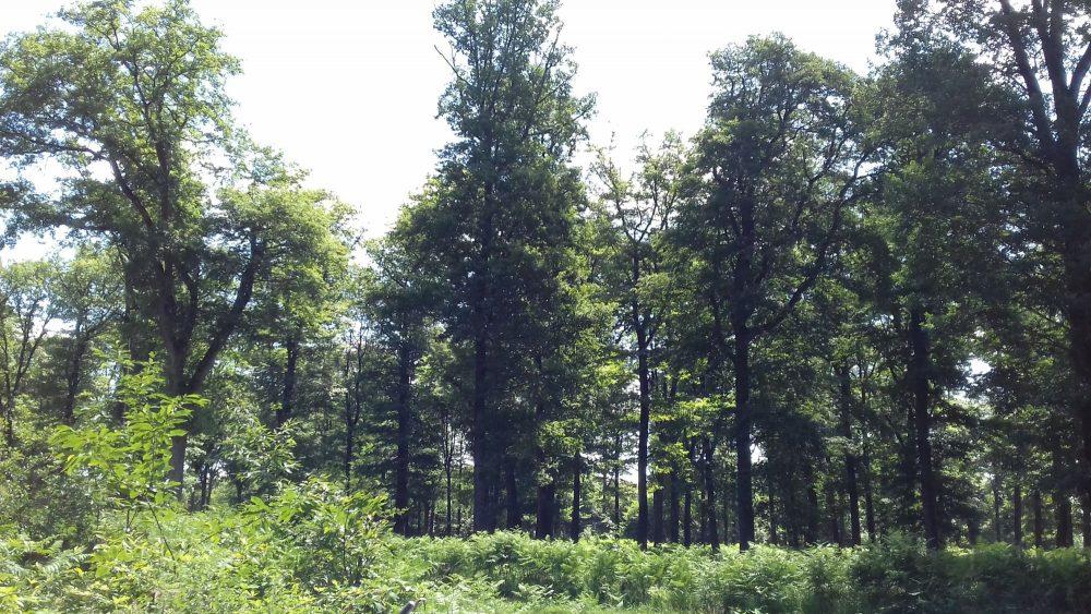 bois de chauffage Corrèze