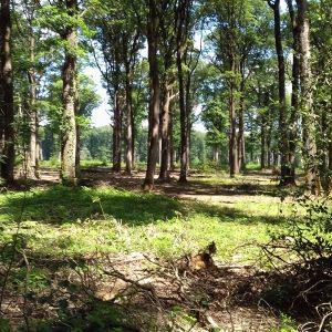 bois de chauffage Dordogne